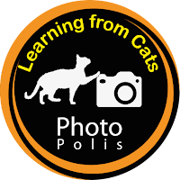 Learning from cats photography, impariamo a fotografare dai gatti Photo Polis