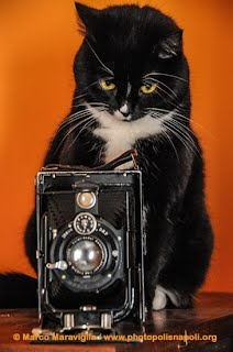 Learning from cats photography Photo Polis